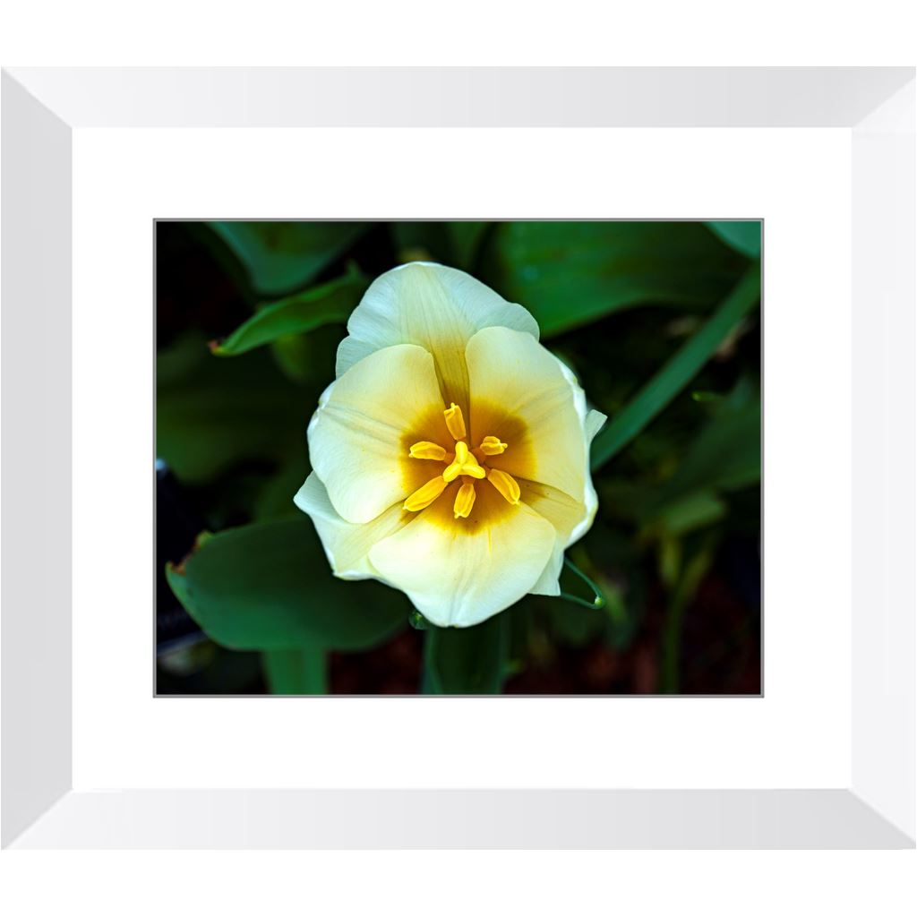 Great Smile Framed Print | Horstmann Designs, Photography Wall Art