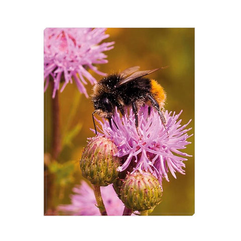 Honey Dust Canvas Wrap | Horstmann Designs, Photography Wall Art