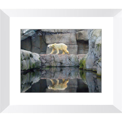 King of the Arctic Framed Print | Horstmann Designs, Photography Wall Art