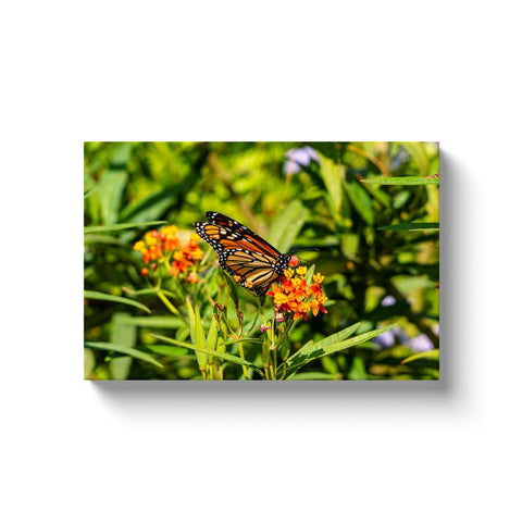 Monarch II-II Canvas Wrap | Horstmann Designs, Photography Wall Art