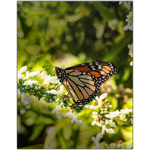 Monarch II-XII Metal Print | Horstmann Designs, Photography Wall Art