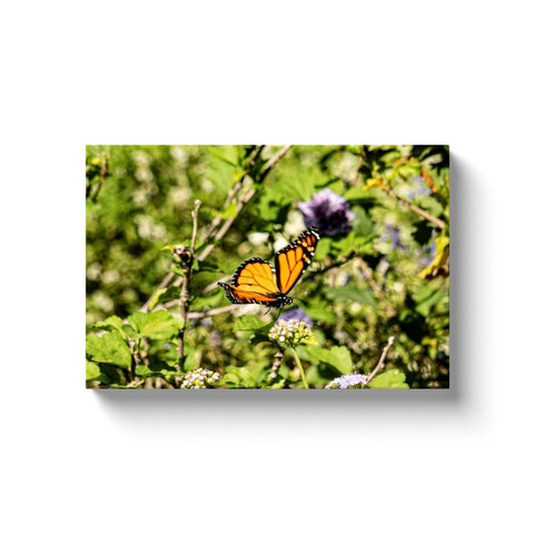 Monarch IV-I Canvas Wrap | Horstmann Designs, Photography Wall Art
