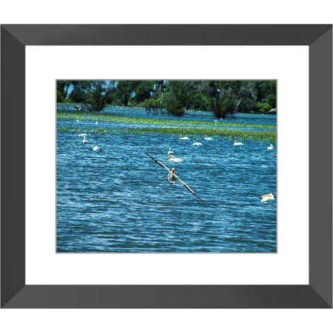 Pelican Landing Framed Print | Horstmann Designs, Photography Wall Art