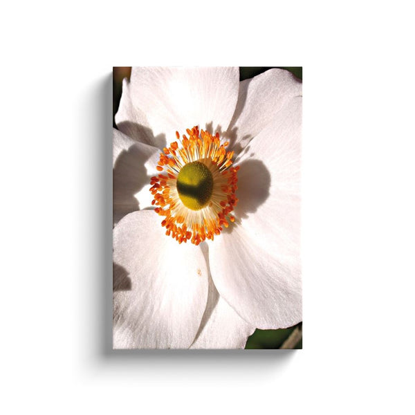 Petals in White Canvas Wrap | Horstmann Designs, Photography Wall Art