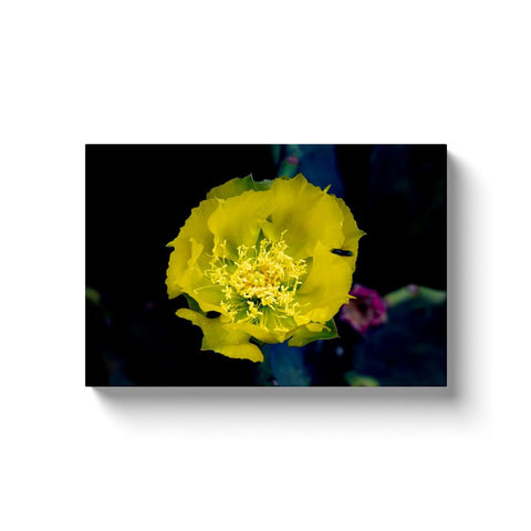 Prickly Pears Canvas Wrap | Horstmann Designs, Photography Wall Art