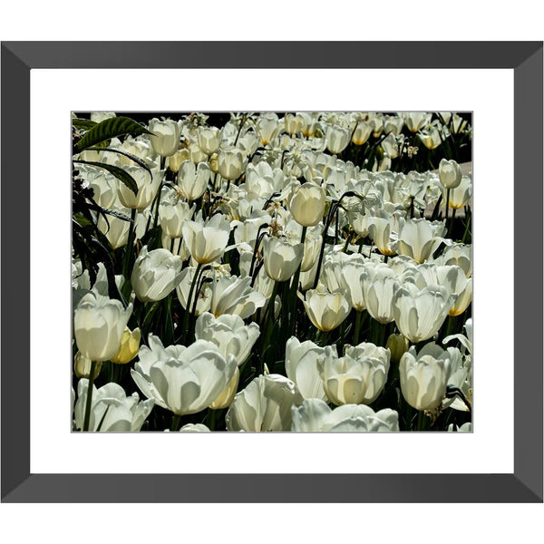 Pure White Framed Print | Horstmann Designs, Photography Wall Art