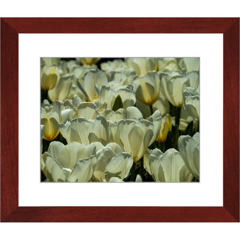 Pure White II Framed Print | Horstmann Designs, Photography Wall Art