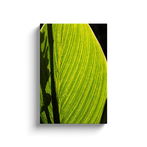Single Leaf Canvas Wrap | Horstmann Designs, Photography Wall Art