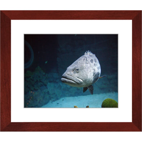 Tropical Hunter Framed Print | Horstmann Designs, Photography Wall Art