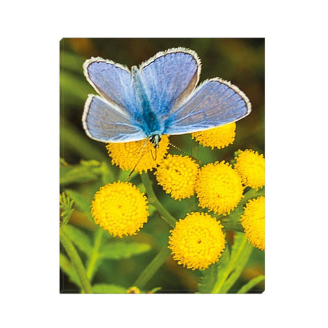 Yellow and the Butterfly Canvas Wrap | Horstmann Designs, Photography Wall Art