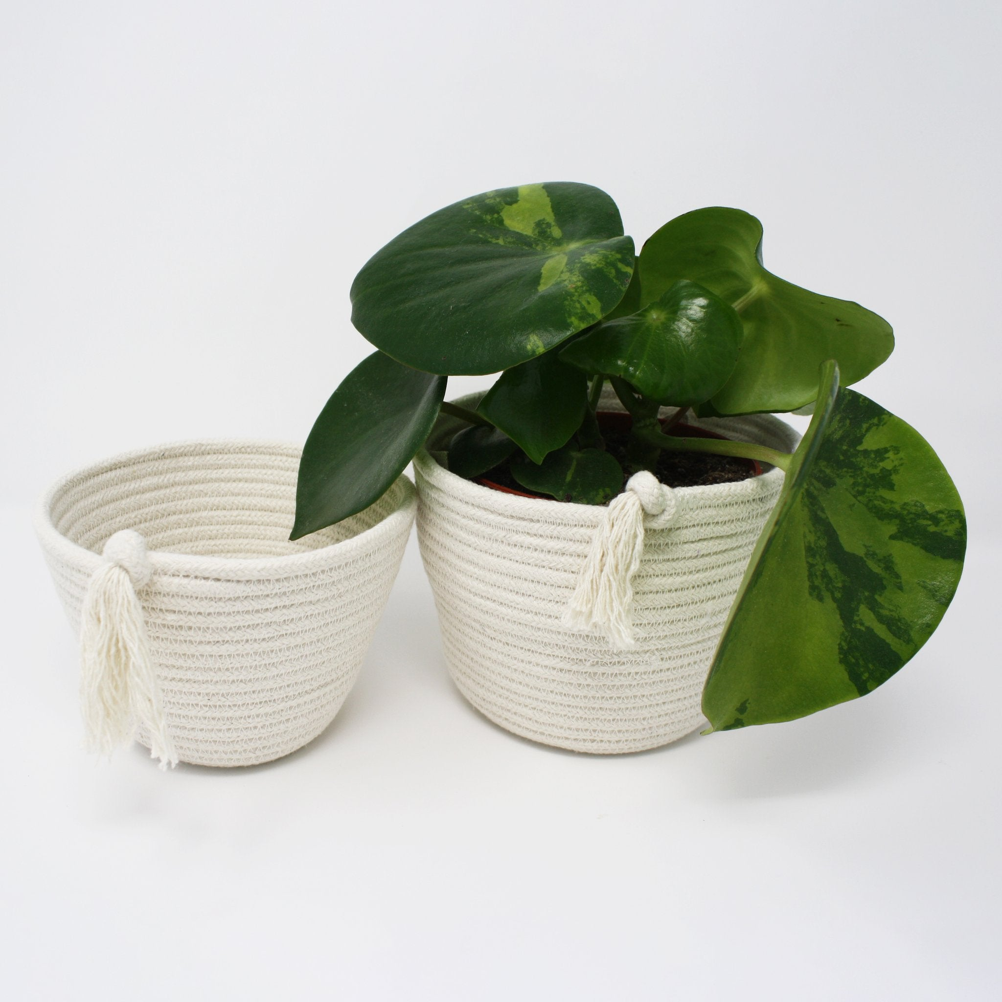 Cotton ECO-TWIST Plant, 100% Cotton - set of 2 (small and large) - natoorio