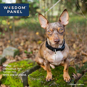 Wisdom Panel Dog DNA Test Kit for Breed and Ancestry Information