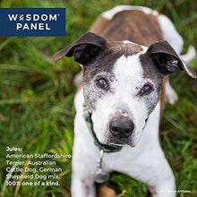 Load image into Gallery viewer, Wisdom Panel Dog DNA Test Kit for Breed and Ancestry Information