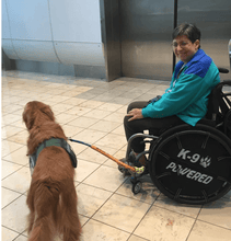 Load image into Gallery viewer, Bike and Wheel Chair Dog Leash