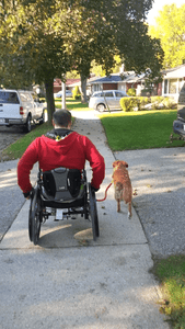 Bike and Wheel Chair Dog Leash