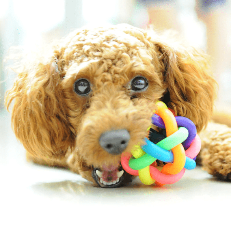 Colorful Rainbow Pet Ball with Bell Dog Toy