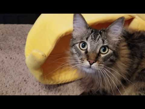 Cute Banana Cat Bed/House Cozy  with Cushion. Warm and Portable
