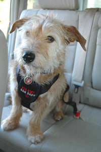 CarSafe Dog Travel Harness for Seatbelt Safety