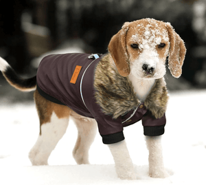 Waterproof Winter Dog Jacket for Small and Medium Dogs