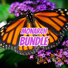 MONARCH BUNDLE