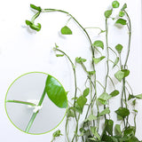 Plant Climbing Wall Fixture Clips