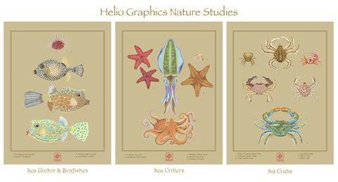 Sea Critter Note Cards