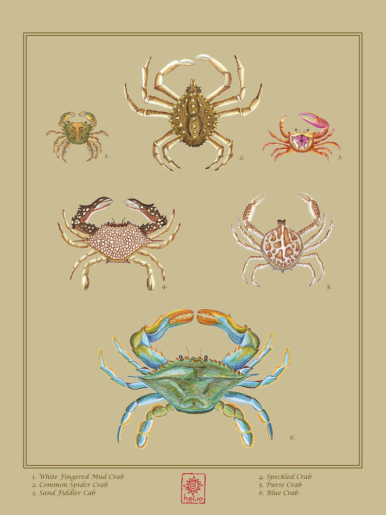 Nature Study: Six Crabs