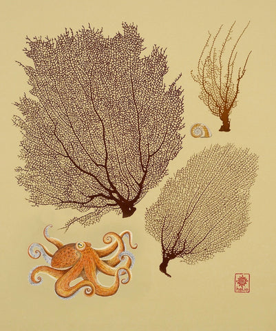 Octopus, Moon Snail and Sea fans / Spirals