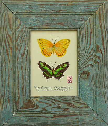 Tropical Butterflies Wood Framed Prints