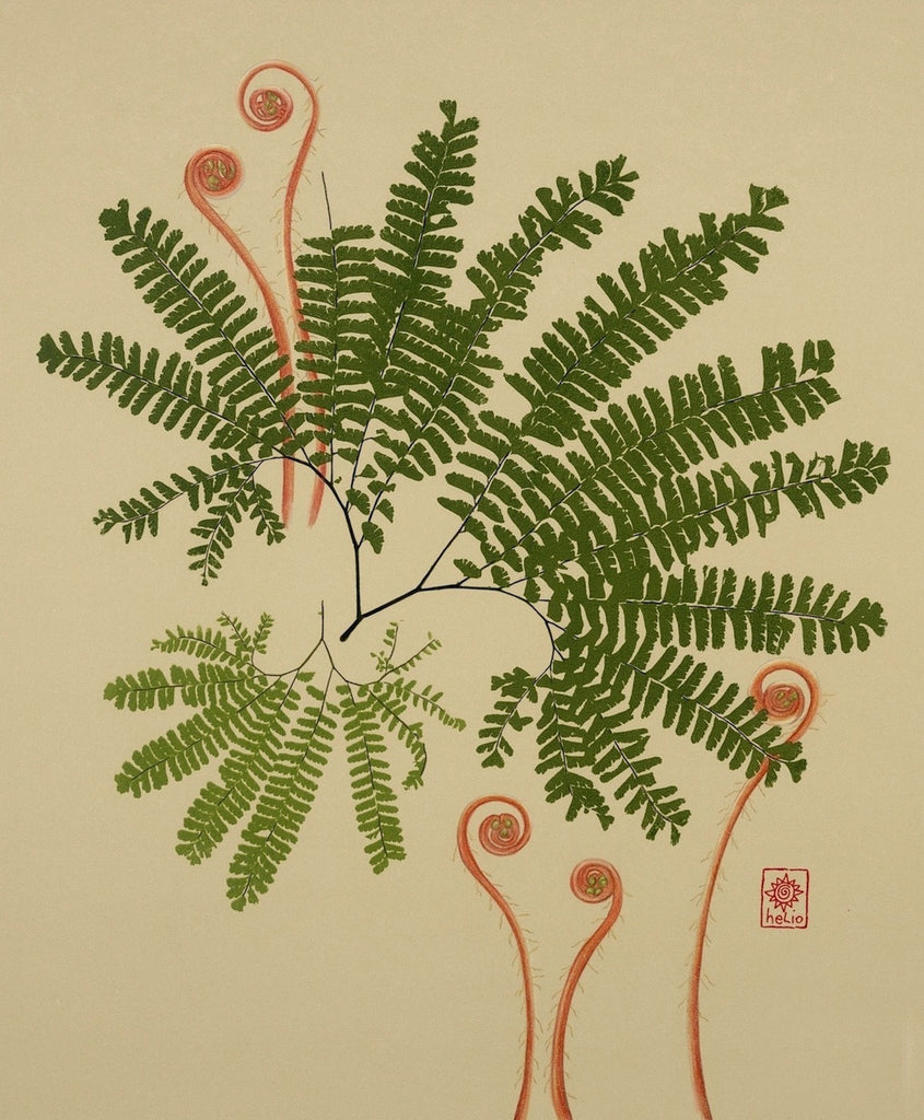 Maidenhair Fern and Fiddleheads / Spirals