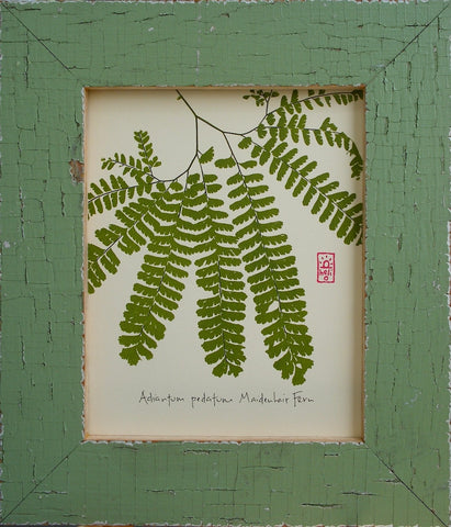 Maidenhair Fern Wood Framed Print