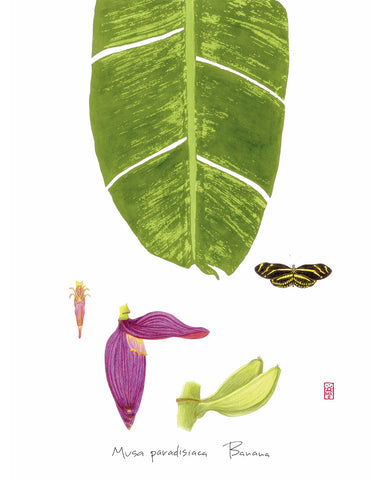 Banana: Tropical Fruit Nature Study