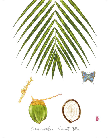 Coconut Palm: Tropical Fruit Print