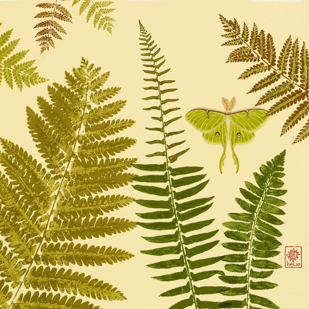 Luna Moth and Ferns