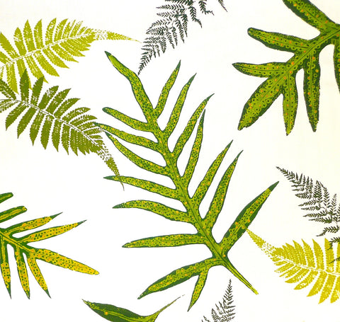 Tropical ferns, ferns, ferns!