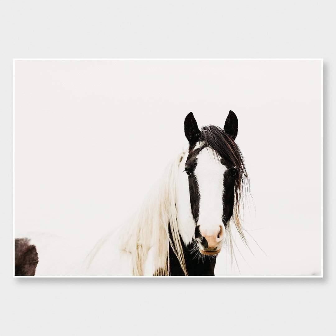 Pinto Horse Photographic Print by Emma Willetts