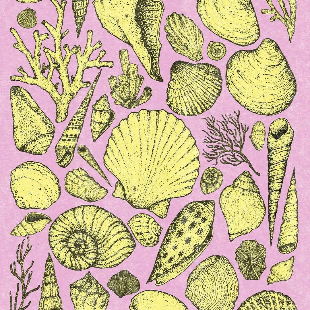 Shells Pink Art Print by Nathan Miller