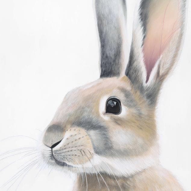 Ambrose Rabbit Art Print by Margaret Petchell