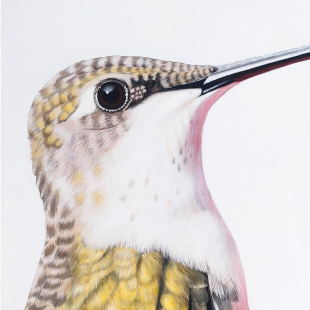 Ava Hummingbird Art Print by Margaret Petchell
