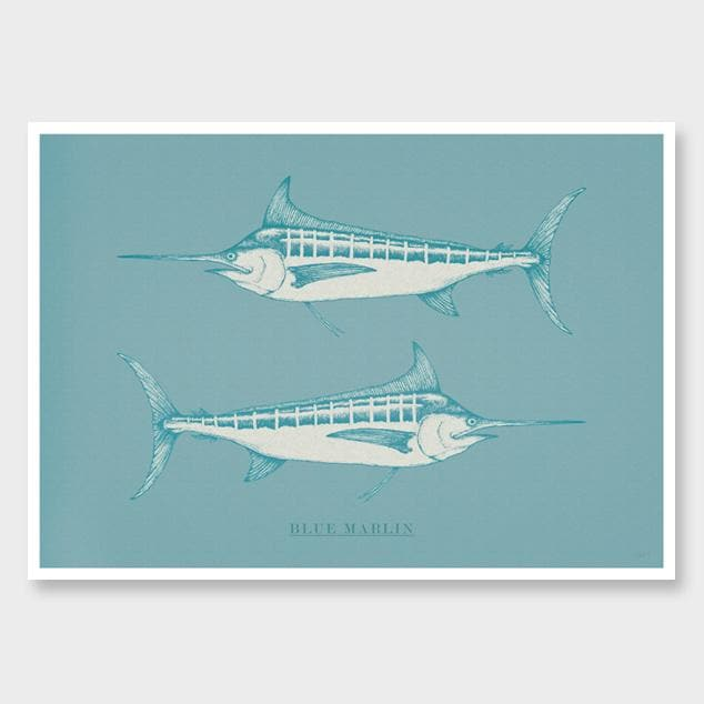 Blue Marlin Turquoise Art Print by Nathan Miller