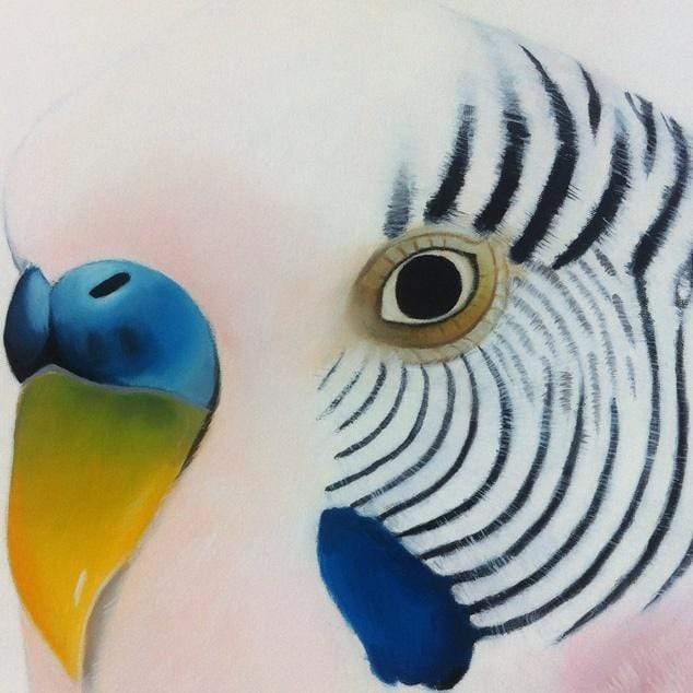 Claris Budgie Art Print by Margaret Petchell