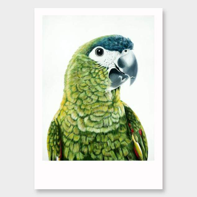 Clarence Hahn's Macaw Art Print by Margaret Petchell