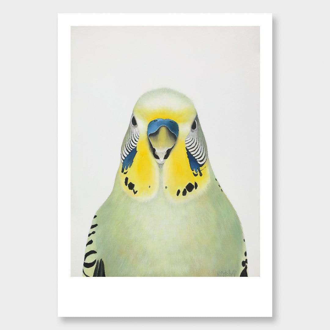 Cyril Budgie Art Print by Margaret Petchell