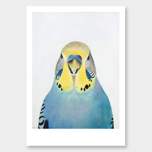 Edgar Budgie Art Print by Margaret Petchell