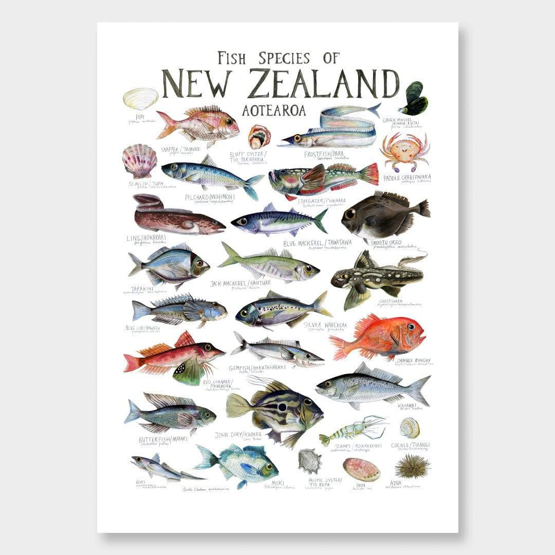 Fish Species of New Zealand Poster by Giselle Clarkson