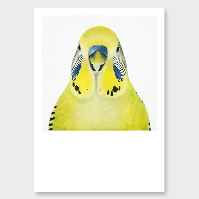 Gladys Budgie Art Print by Margaret Petchell