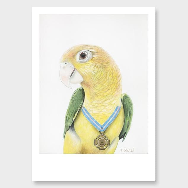 Hendrikse Parrot Art Print by Margaret Petchell