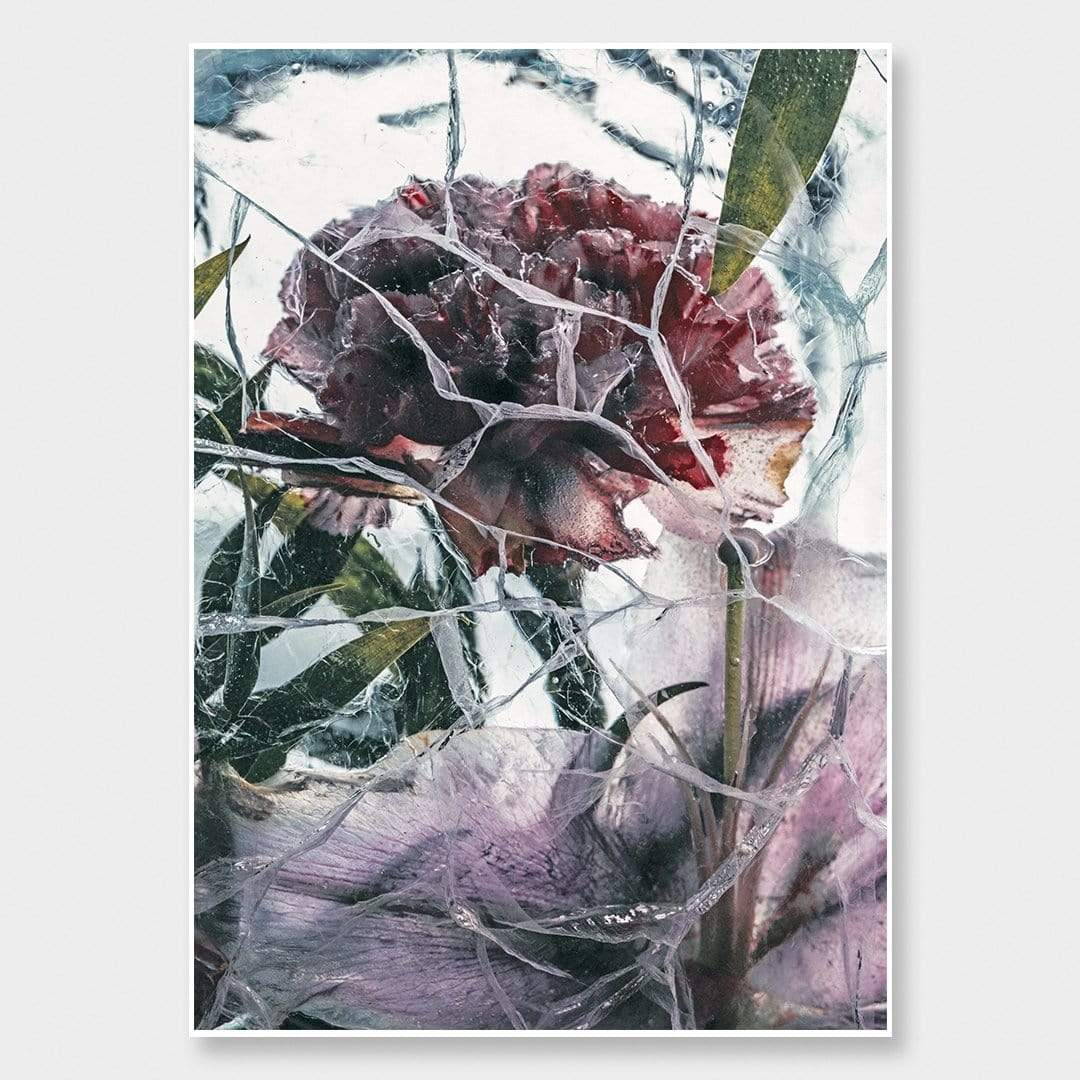 Ice Flower XV Photographic Print by Maegan McDowell
