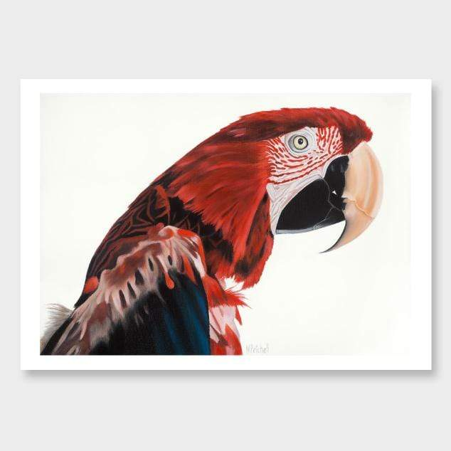 Jerry Red Macaw Art Print by Margaret Petchell