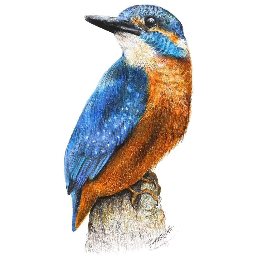 Kingfisher Art Print by Olivia Bezett